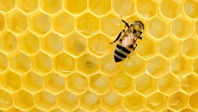 Honning økologisk eller ikke økologisk